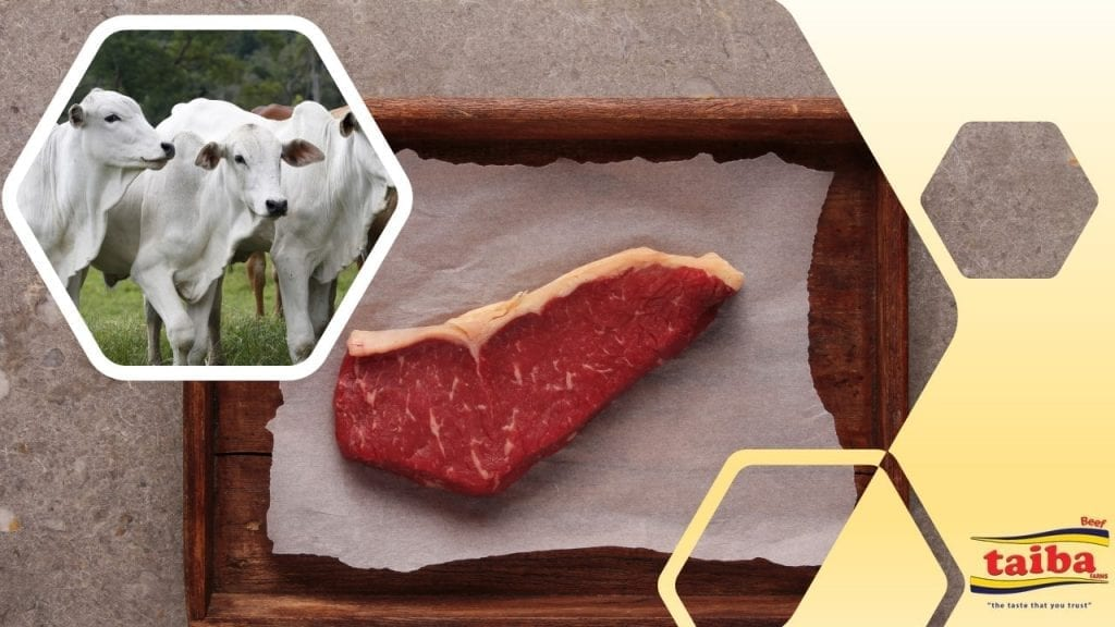wholesale-meat-beef-chicken-poultry-beef-meat-frozen-meat-frozen-chicken-chilled-beef-suppliers-wholesalers-distributors-in-italy-taiba-farms-Beef