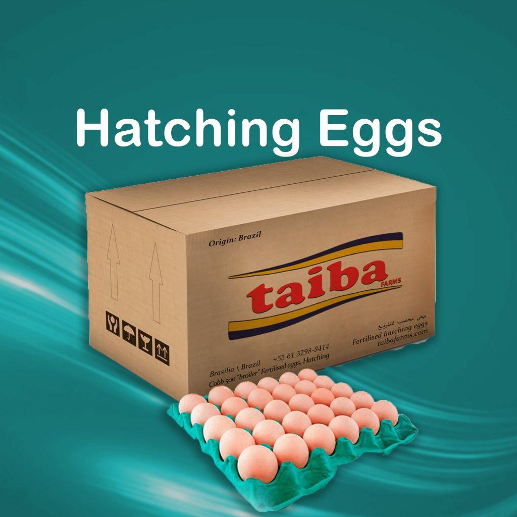 hatching-eggs-fertelized-eggs-hatchery-eggs-poultry-haching-eggs-suppliers-wholesalers-destributors-in-uae-dubai-sharjah-abu-dhabi